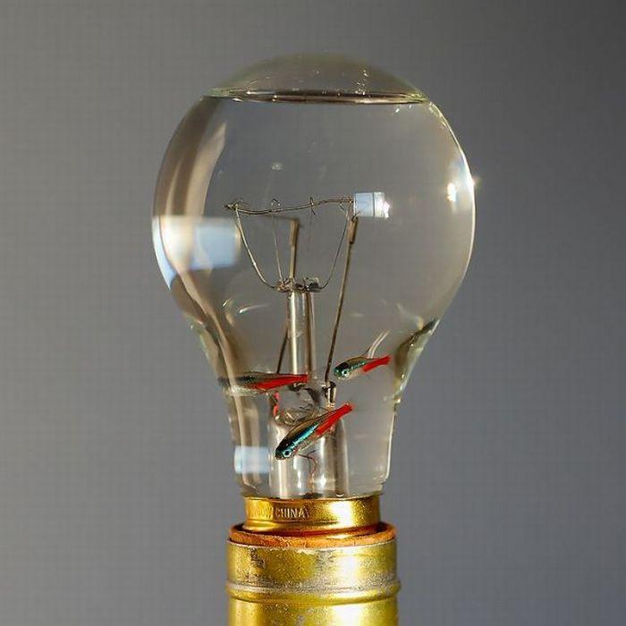 Аквариум - мечта электрика