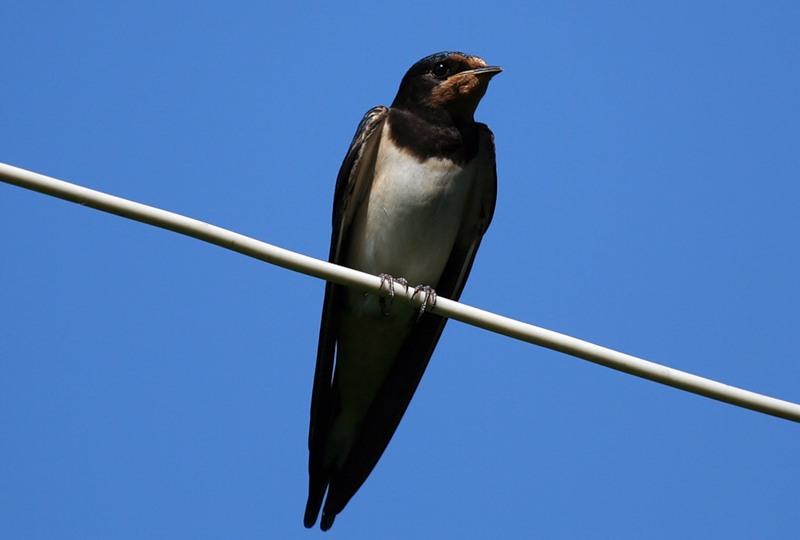 птица на проводе